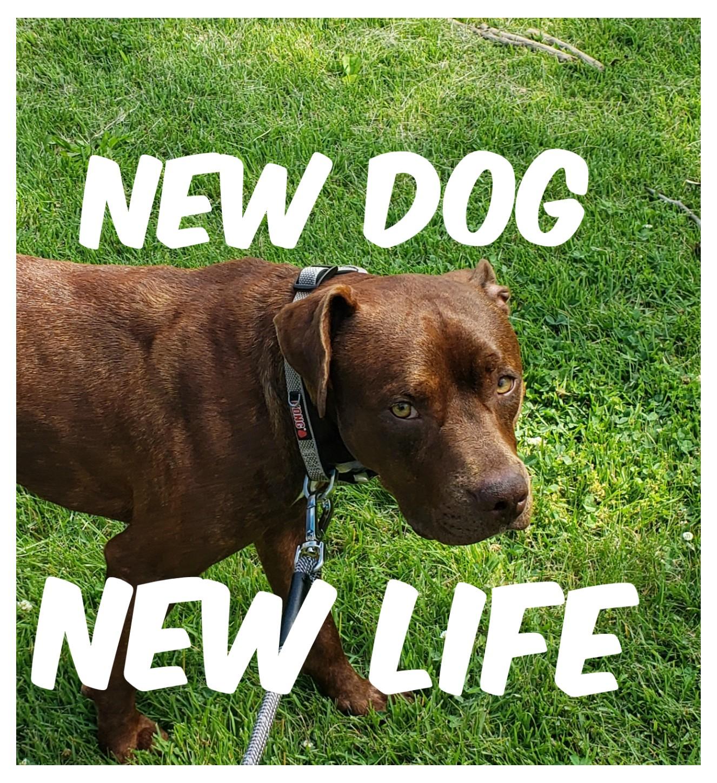 New Dog-New Life